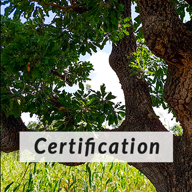 Certification of tree